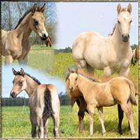 NEW 2016 foals for sale