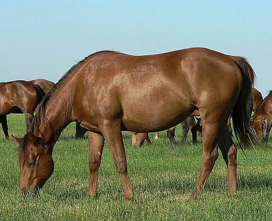 new mares 029.jpg - Image 1