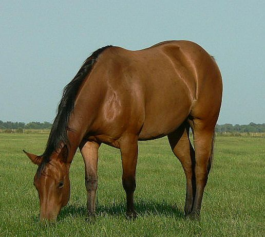 new mares 082.jpg - Image 1